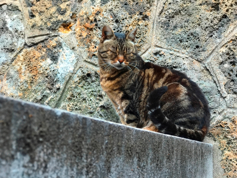 Like a ray of sun: I can see your halo kitty, Cimetière de Montmartre (Photo by Theadora Brack)