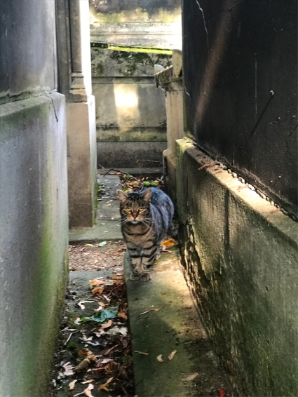 Jane Goodall may have her chimpanzees, but I've got my cats at the Cimetière de Montmartre (Photo by Theadora Brack)