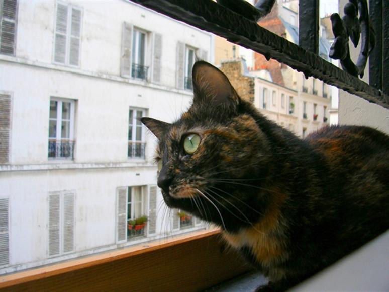 "She's a bird watcher: Le Fabuleux Destin de ""Kitty"" (Photo by Theadora Brack)"