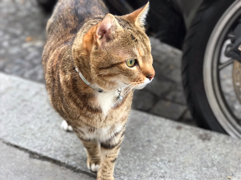 In celebration of the upcoming international Pet Travel Safety Day, let's spend it with a few of my own favorite felines in the Paris, Abbesses (Photo by Theadora Brack)