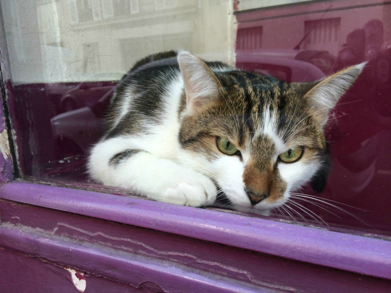 How much is that mouser in the purple window? (Photo by Theadora Brack)