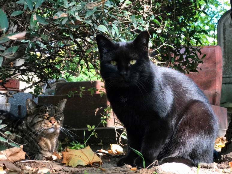 Whenever I need to briefly escape the hassles of the world, I seek out the gentle caretakers of the Cimetière de Montmartre, les chats (Photo by Theadora Brack)